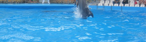 Nemo дельфинарий