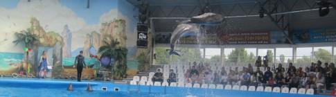 Lego dolphinarium