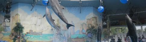 Дельфинарий в Киеве
