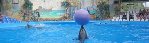 Киевский дельфинарий Немо