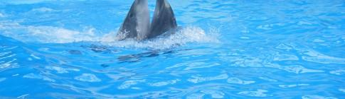 Смотреть дельфинарий Киев