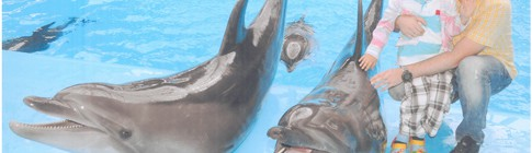 Дельфинарий Киев ВДНХ